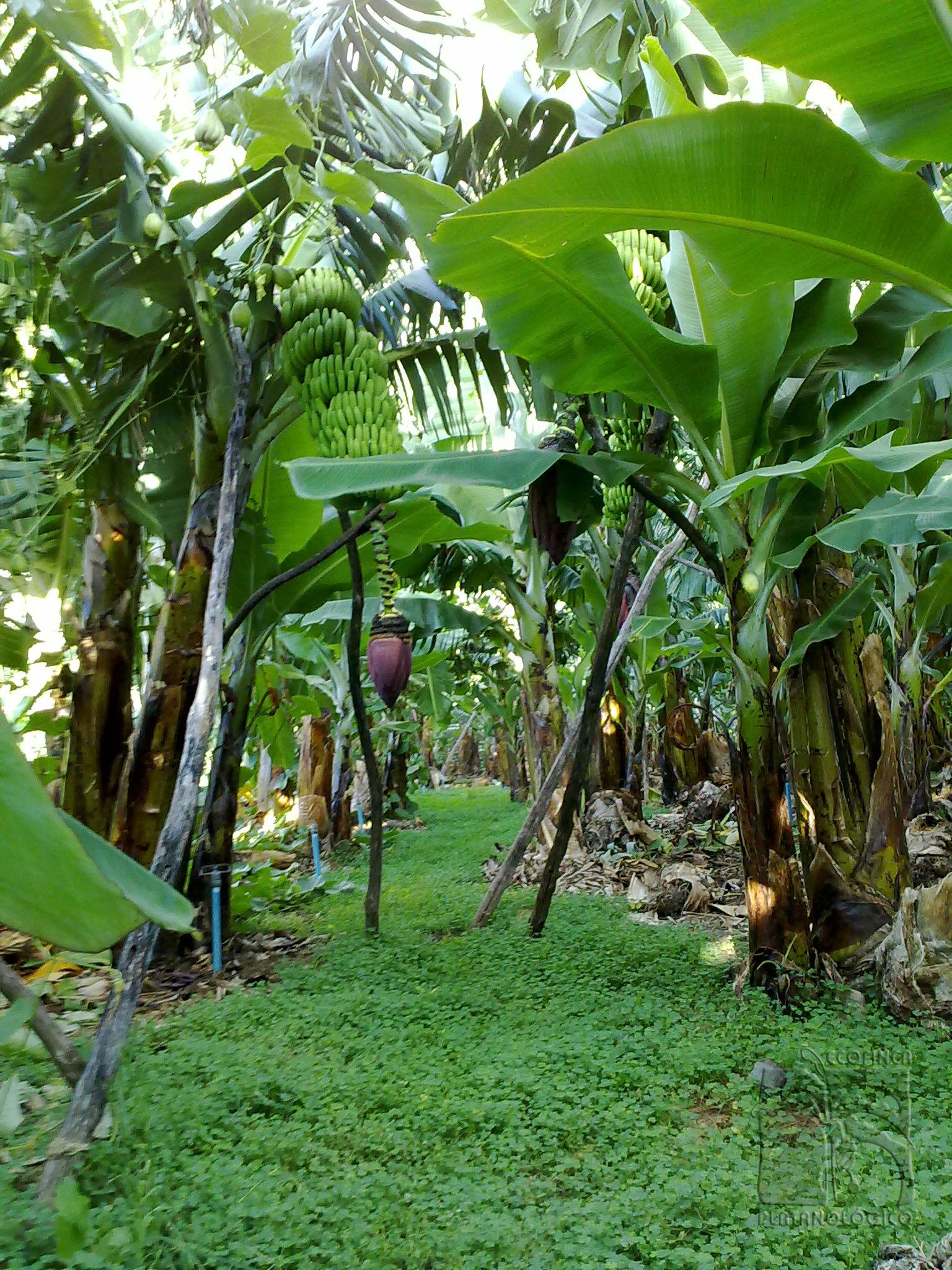 Paseo por la finca, La biodiversidad de un jardín botánico subtropical puesta al servicio de la producción de alimentos.