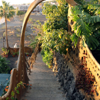 Ecofinca Platanológico. La Palma. Plátanos ecológicos